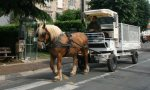 horse-and-cart-recycling-005
